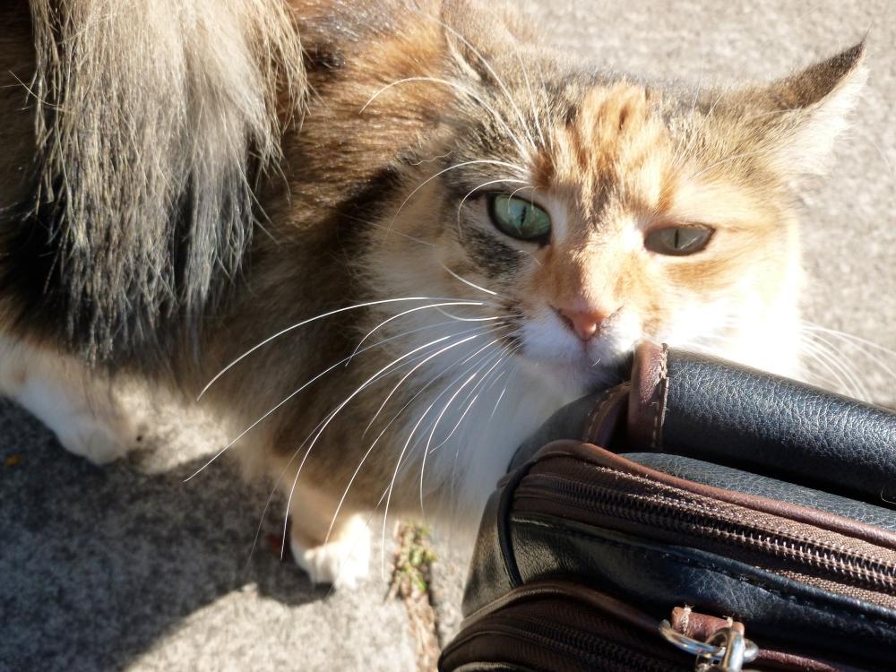 Kenton Street Kitty