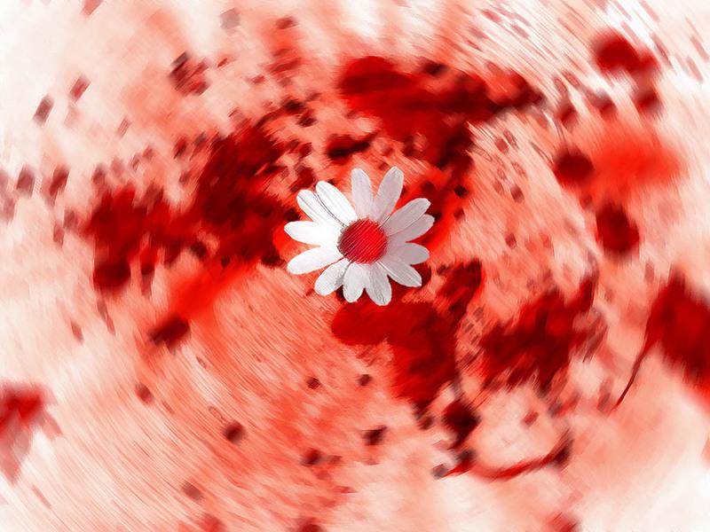 daisy-in-blood-flower