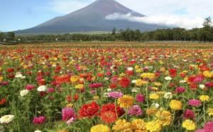 mountains-flowers-fields-1920x1200-hd-free-downloads