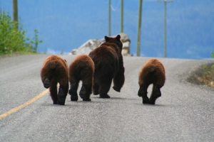 Bear bums by Jethro Taylor