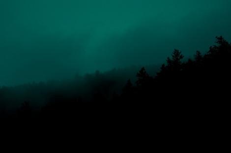 greenforest_fi
