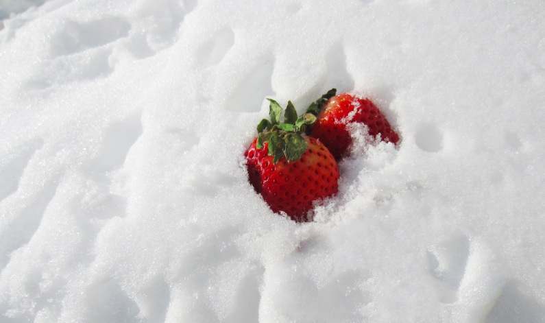 snowstrawberries