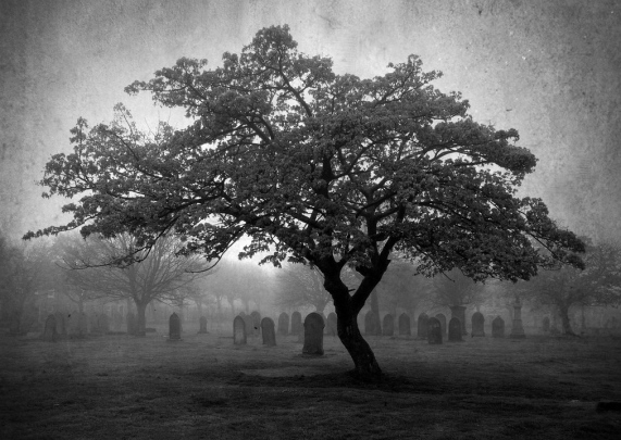 Image result for picture of tree in graveyard